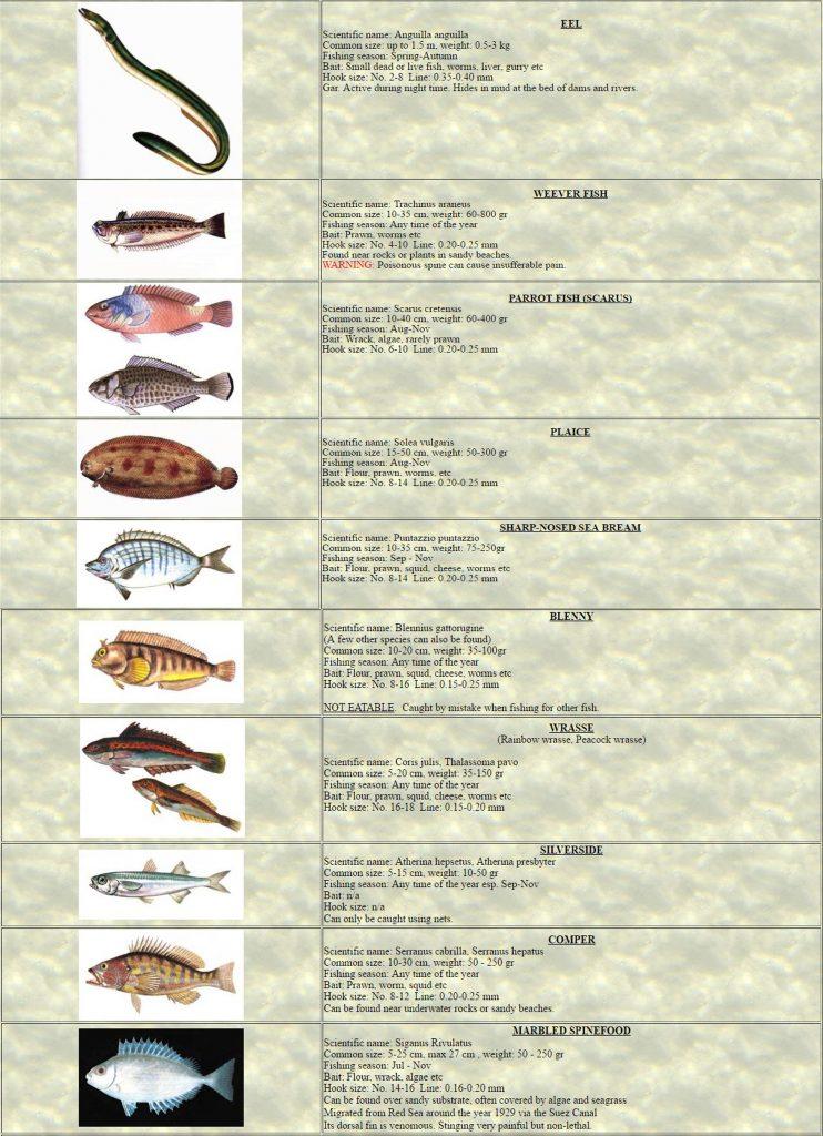 Pg3 Fishing(Angling)